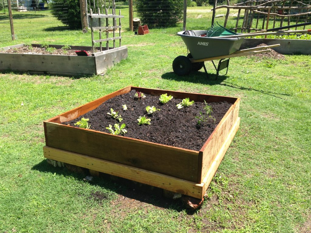 Building Raised Garden Beds on the Homestead